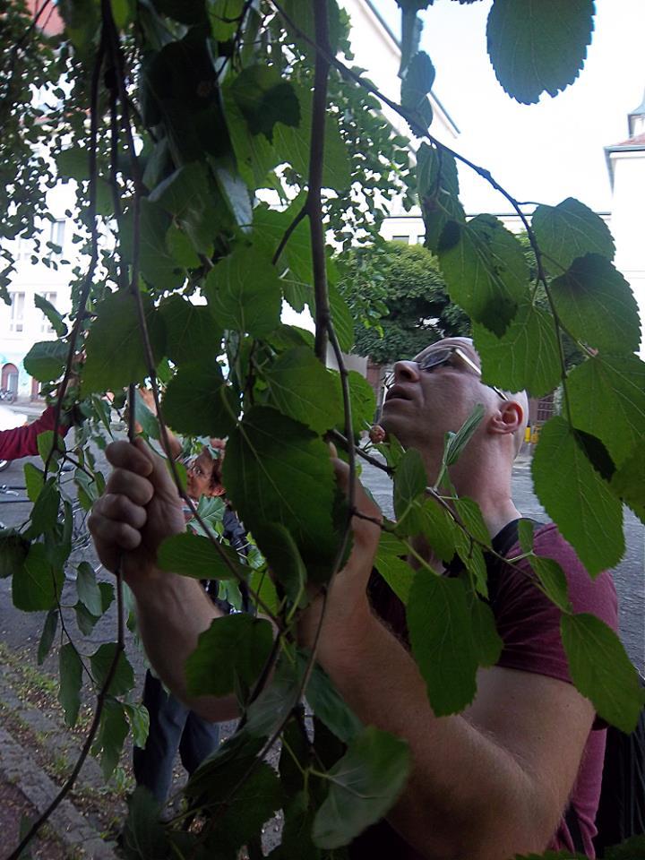 Am Maulbeerbaum