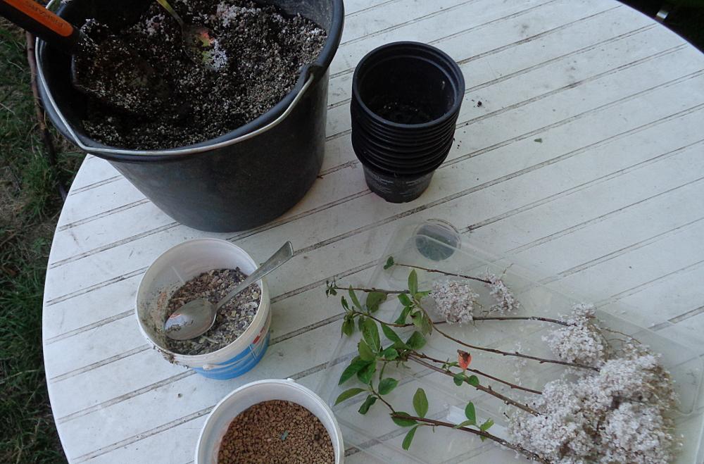 Aronia vermehren - Zutaten zum Einpflanzen