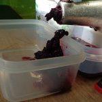Kleines ABC der Erntehilfen – Brombeeren ernten und entkernen