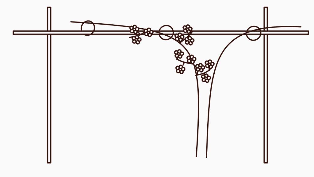 Frühjahrspflege für Brombeeren – Alter Trieb mit Blüten