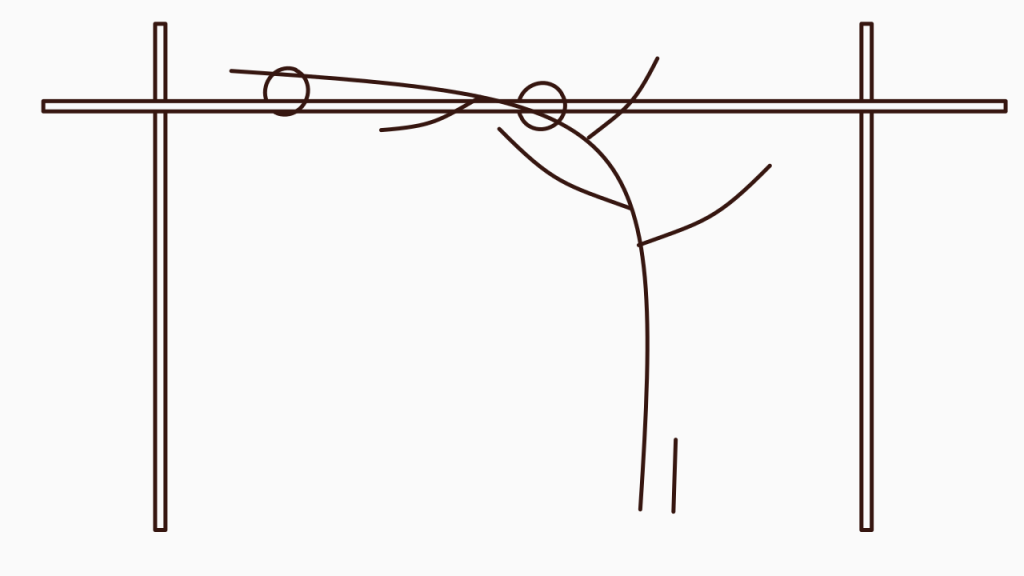 Frühjahrspflege für Brombeeren – Überwinterter Trieb mit frischem Austrieb