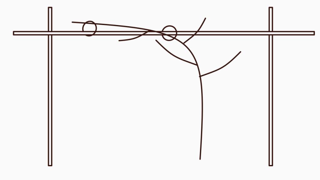 Frühjahrspflege für Brombeeren – Wachsender frischer Trieb mit Seitentrieben am Spalier