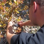 Obstgehölze hegen und pflegen – Frühjahrspflege für Heidelbeerbüsche
