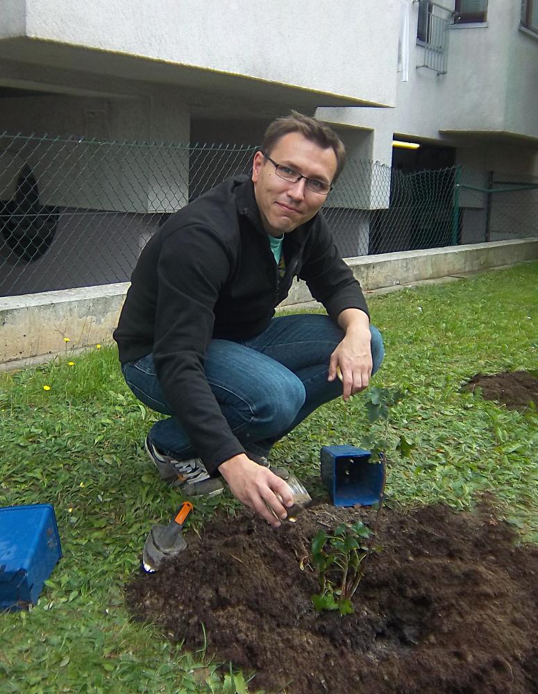 Johannisbeeren pflanzen am Wohnheim Mainzer Straße
