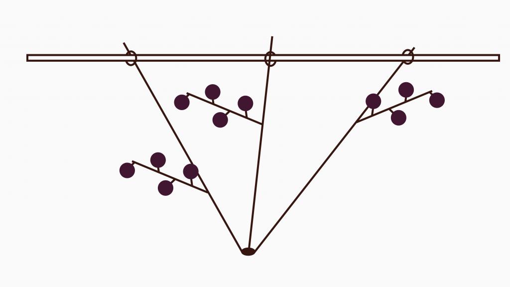 Jostabeere ans Spalier pflanzen – 3 angebundene Triebe mit Fruchtholz