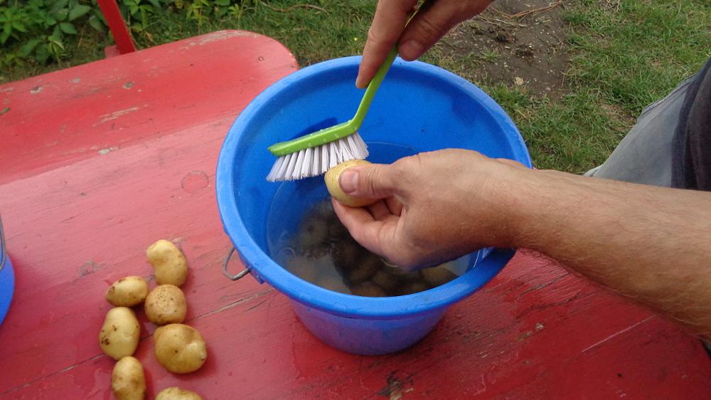 Kartoffelpuffer aus der Gartenkueche - gruendlich waschen