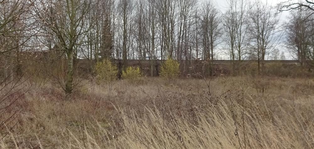 Kornelkirsche bestimmen – Gelbe Markierungen in der Landschaft