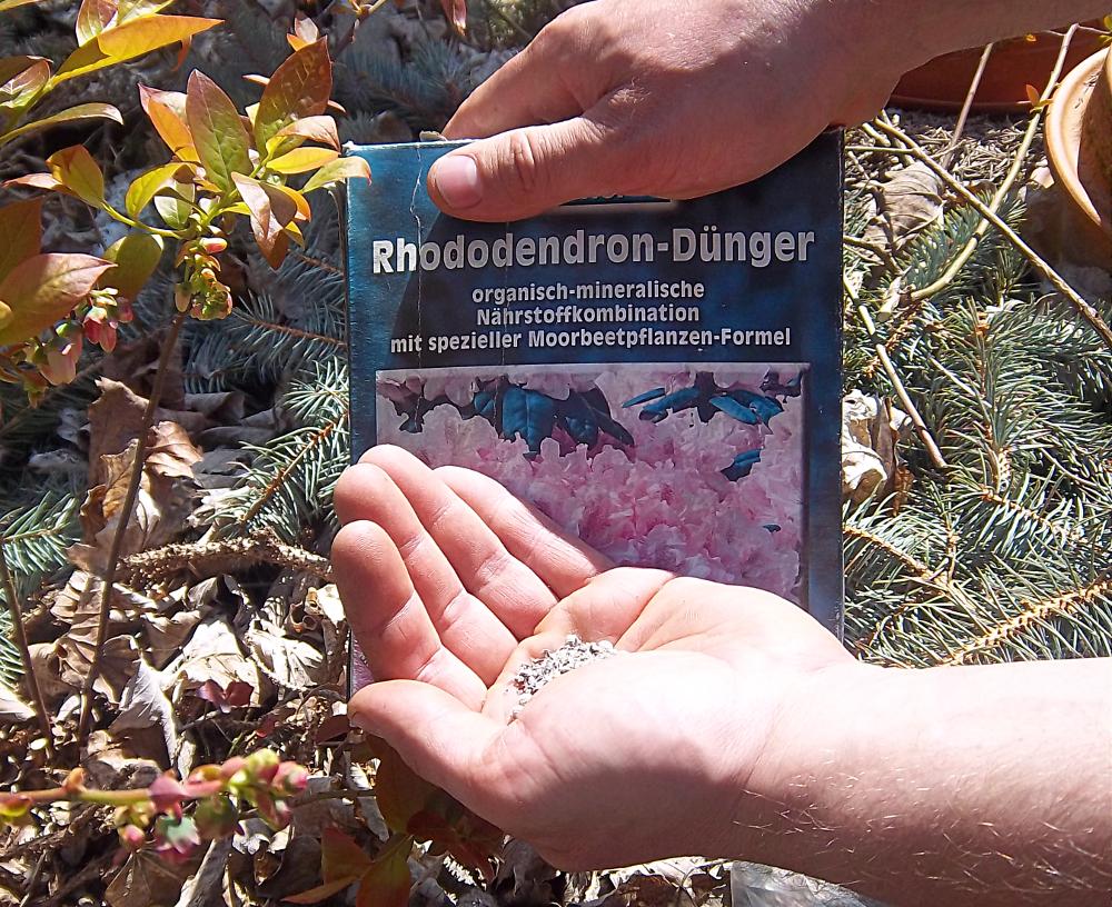 Rhododendronduenger für Heidelbeeren