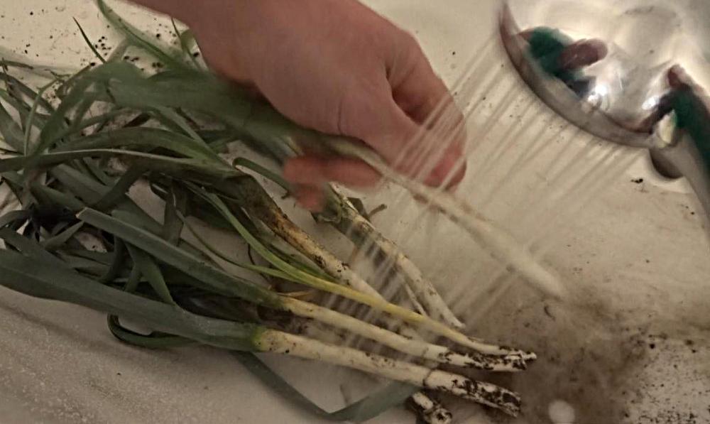 Suppengrün selbst machen - Porree waschen