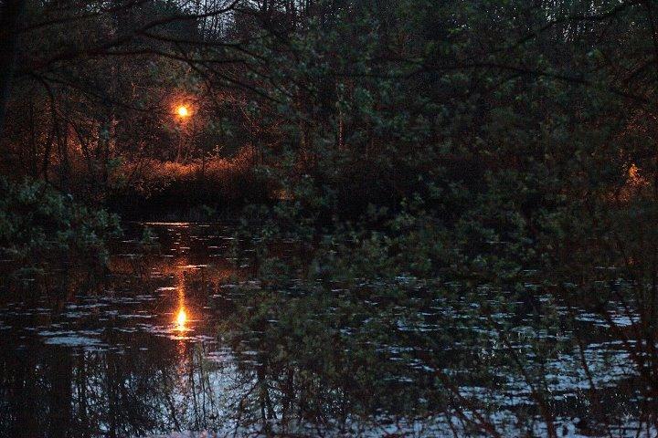 Nachts im Auwald