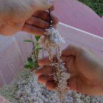 Obstgehölze selbst vermehren – Neue Apfelbeeren durch Stecklinge