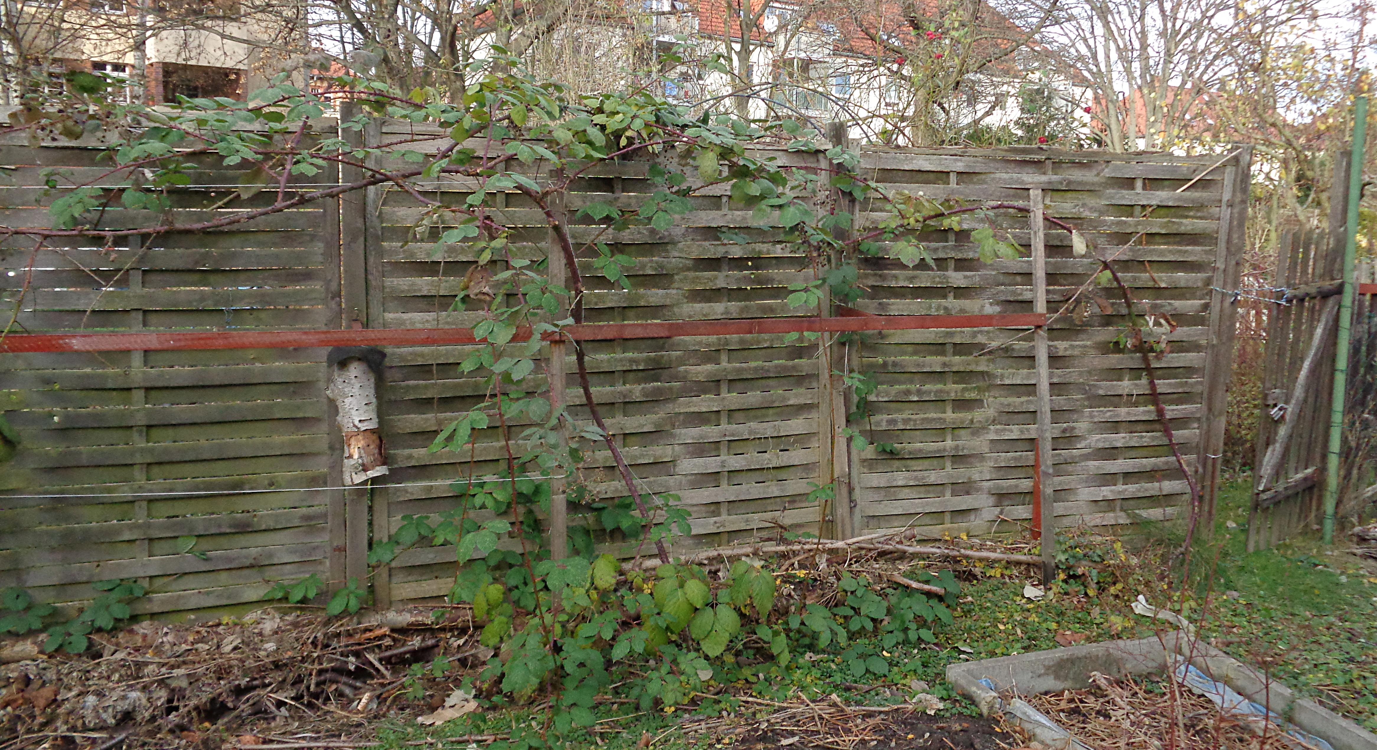 Berühmt Obstgehölze hegen und pflegen – Herbstpflege für Brombeeren @WL_75