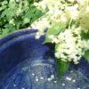 Kleines ABC der Erntehilfen – Holunderblüten in Schüttelernte