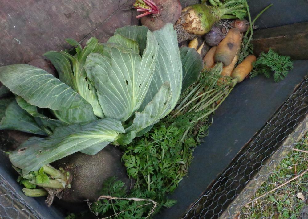 Sellerie-Aufstrich – Frisches Gemüse frisch vpom Feld