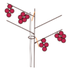 Obstgehölze hegen und pflegen – Spindelerziehung an einer Jostabeere